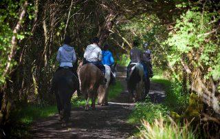 Equestrian-Holidays-Horse-walking