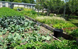 organic-garden-vegetables