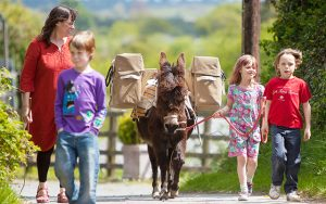 donkey walk ireland