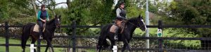 horse riding lessons ireland
