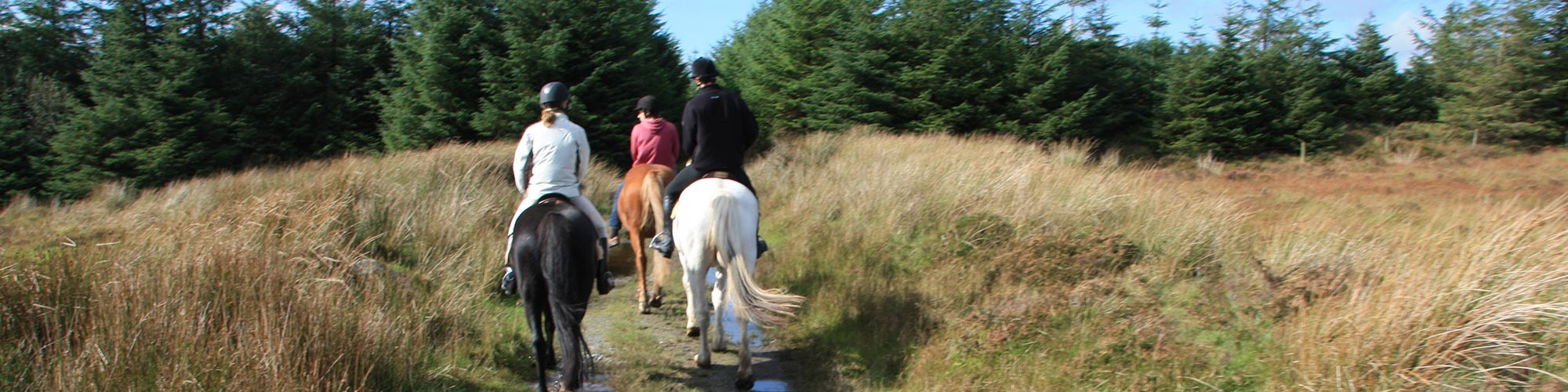horse riding nature trail ireland